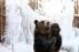 불곰의 겨울 즐기기