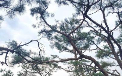 [N샷] 성유리, 나이 잊은 '숲속 요정' 비주얼…완벽 청순미