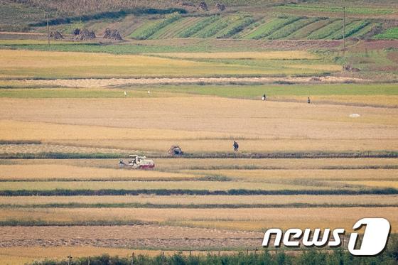 벼가 익어가는 북한