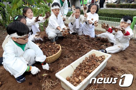 어린이농부들의 가을걷이
