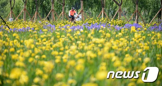 자전거 타고 창포 꽃길 달려요