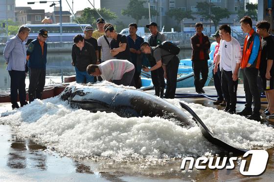 바다의 로또 밍크고래