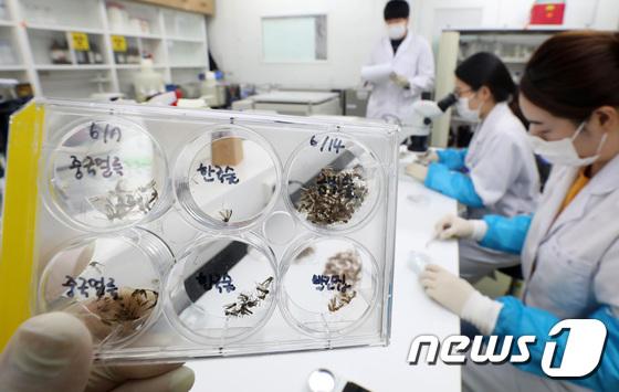 경기 파주지역서 말라리아 원충 감염 모기 발견