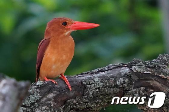 옥산서원 찾은 호반새