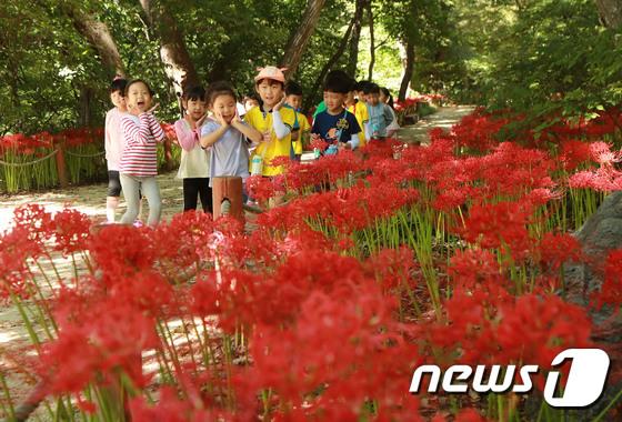 꽃무릇과 어린이들