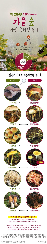 [그래픽뉴스] \'헷갈리면 먹지마세요\' 가을철 야생 독버섯 주의