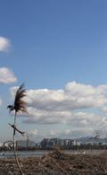 파란 하늘과 흰 구름