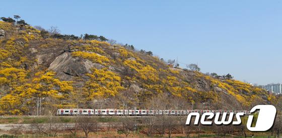 봄기운 싣고 달리는 열차