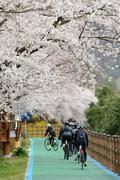 봄 정취 만끽하는 자전거족