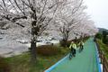 '벚꽃 따라 달리는 기분 참 좋다'