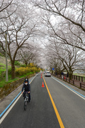 '자전거 타고 벚꽃길 달려요'
