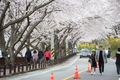상춘객들로 북적이는 섬진강변 벚꽃길
