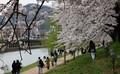 벚꽃 개화에 봄나들이 나온 순천시민들