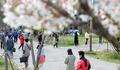 사전투표 위해 벚꽃 아래 줄지은 유권자들