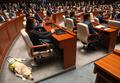 김예지 의원과 함께 의원총회 참석한 안내견 조이