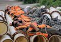 [사진] 눈 붙이는 포양호 제방쌓기 동원된 中 군인들