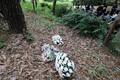 유류품 발견 일대 야산에 놓인 꽃
