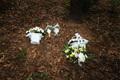 이춘재 연쇄살인 사건 희생자 유류품 발견 인근 공원에 놓인 꽃