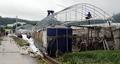 폭우로 무너진 비닐하우스, 복구작업 분주