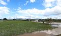 침수된 논 위로 보이는 파란하늘