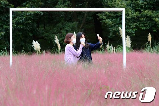 핑크빛으로 물드는 가을