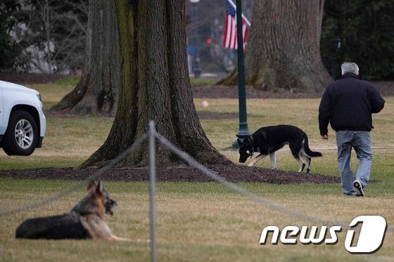 경호원 물린 사고 Biden's'dog '가 백악관으로 돌아온다