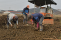 땅속 보물 찾아 나선 농민들
