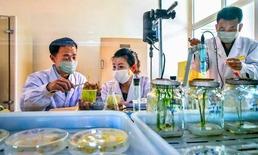 북한 농업연구원 벼연구소 연구지들…