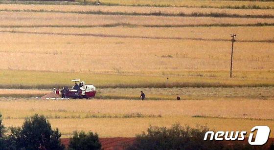 추수 나선 북한 주민들